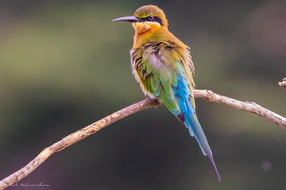 Muticolor bird perched on a branch