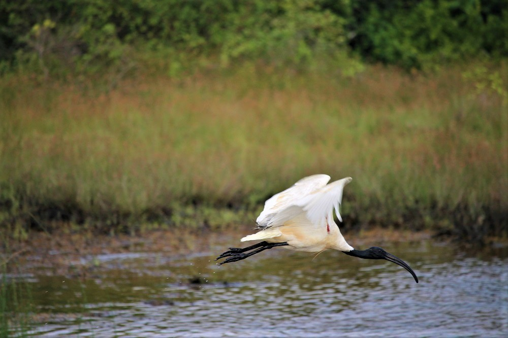 White and black bird flying over water