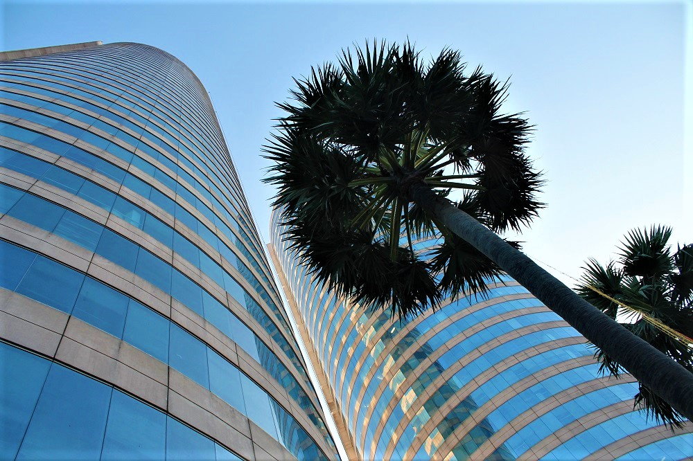 Palm tree in front of a building