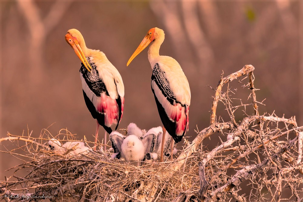 Family of birds with parents and nestlings in a nest
