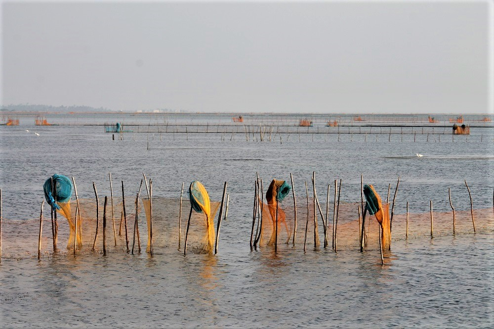 Several oyster fishing nets in the water