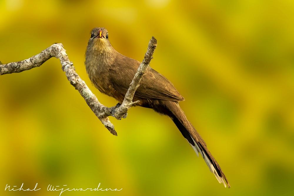 Brown bird on a branch